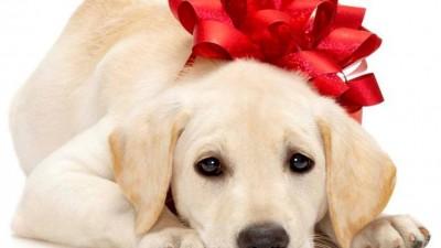 Panariello salva cane e lo restituisce alla padrona: Facebook boom