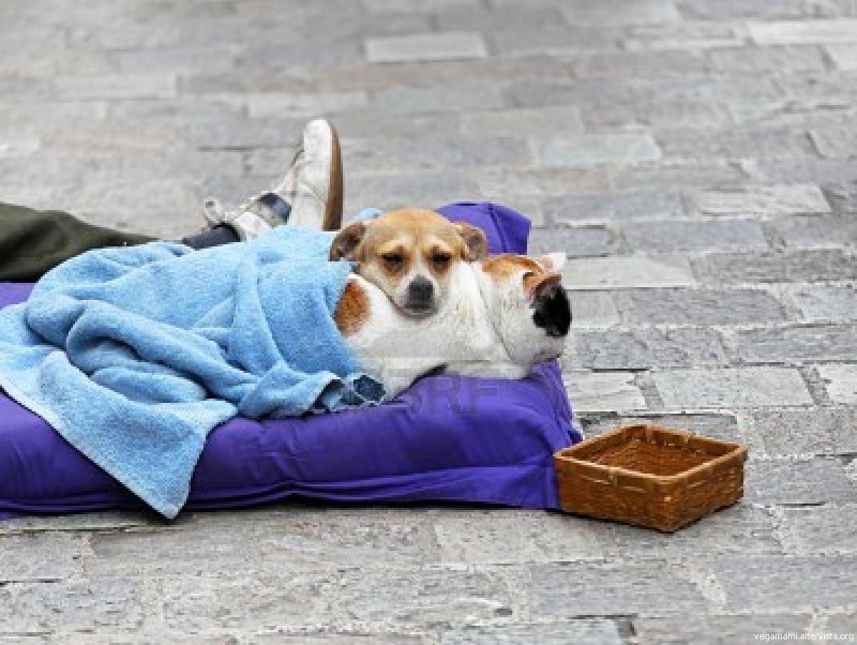 Roma, denunciato mendicante che maltrattava i suoi due cani