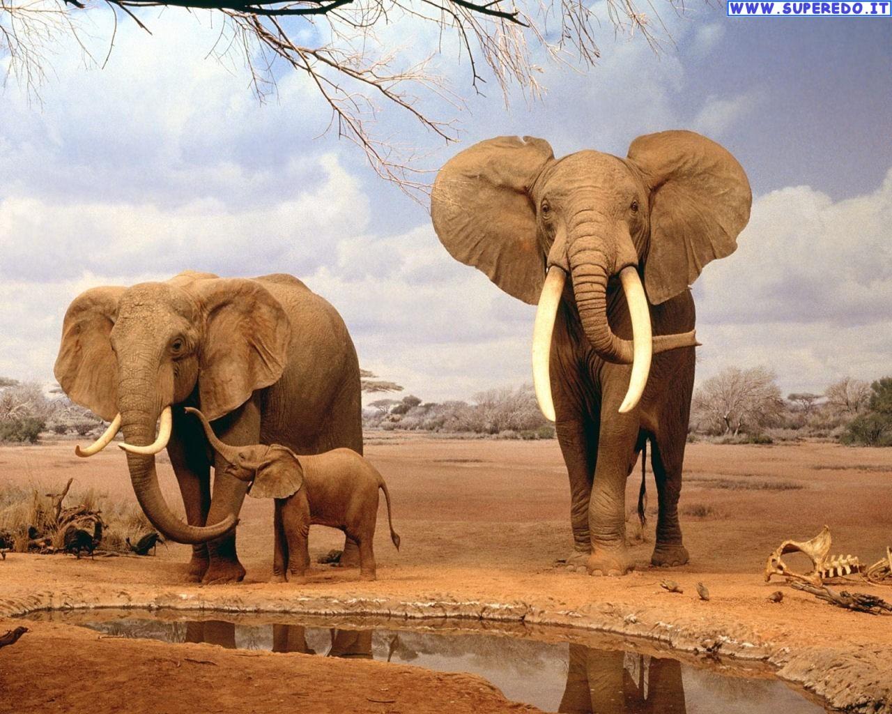 Gli elefanti sanno sconfiggere il cancro, possiamo imparare da loro