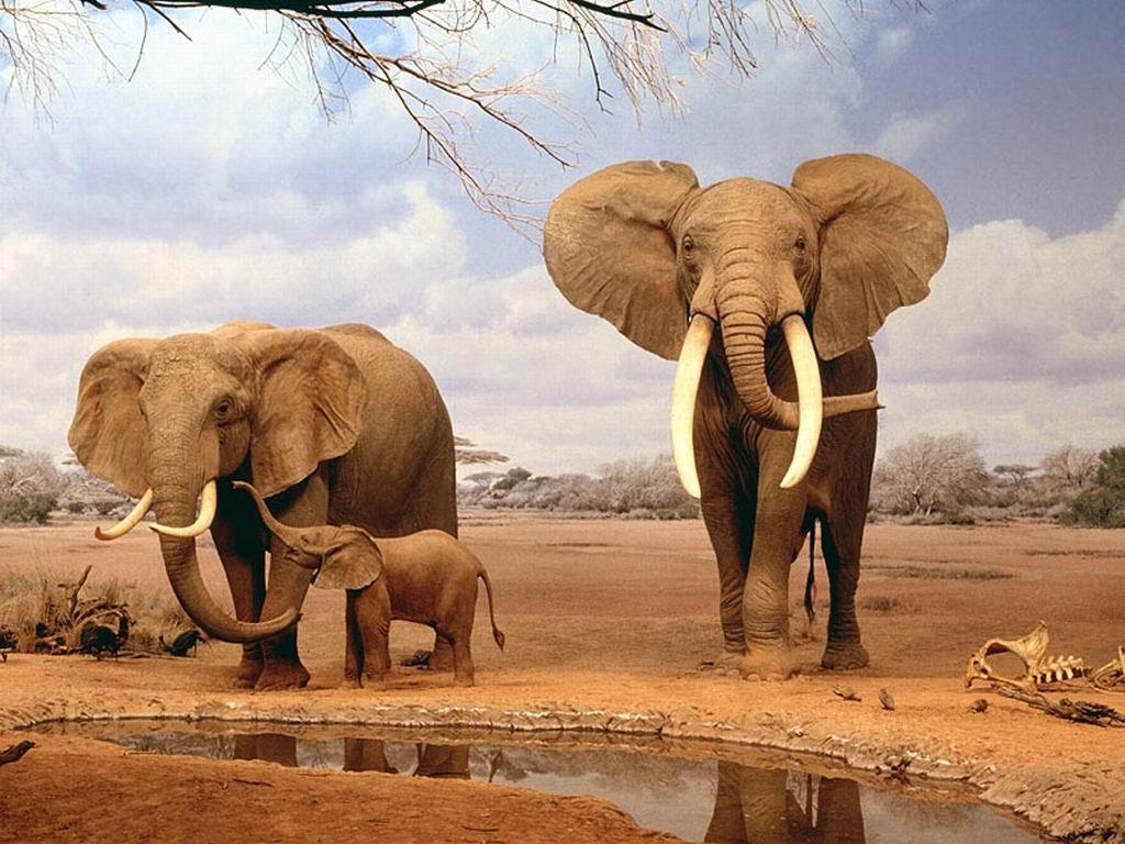Strage di elefanti in Zimbabwe: la nuova arma sono i droni