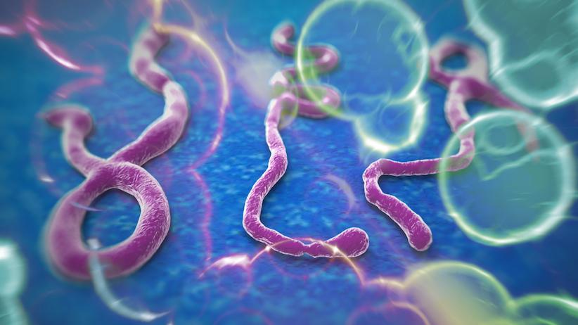 Niente ebola a Genova, il primo test dice malaria