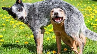 Cuccioli lanciati dal viadotto, denunciato 51enne