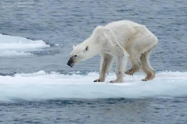 Allarme NASA: ghiaccio Artico ai minimi storici