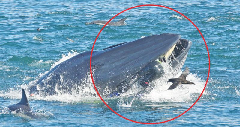 """Sub ingoiato da una gigantesca balena, viene """"risputato"""" fuori"""