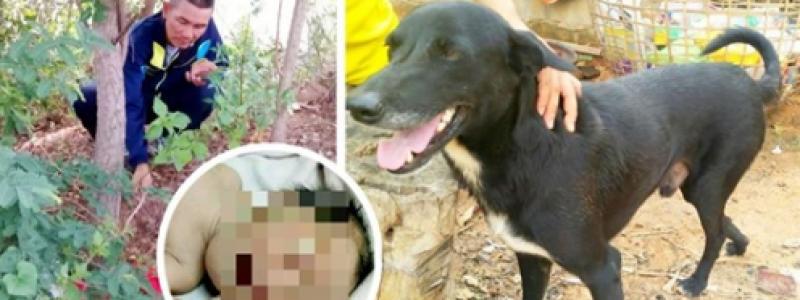 Cane disabile scava e trova neonato sepolto vivo dalla madre