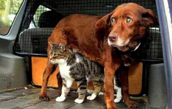 Gatto fa da guida ad un cane cieco: storia di una tenera amicizia