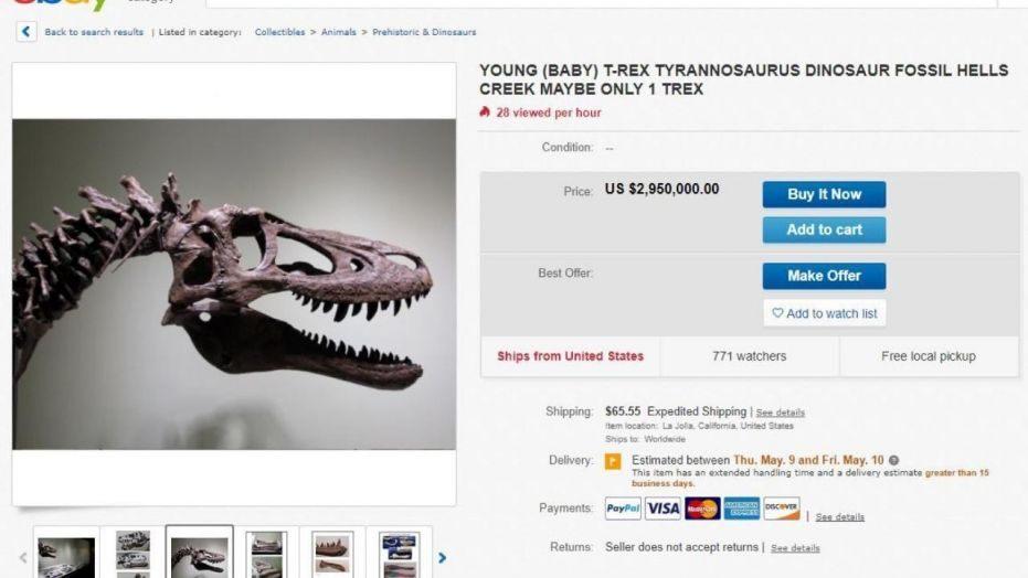 Cucciolo di T-Rex in vendita su e-Bay: costa 3 milioni di euro