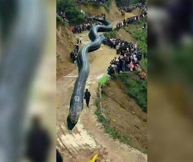 Terremoto causato da un serpente gigante: la notizia crea il panico